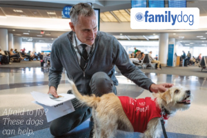 Airport therapy dogs comfort anxious travelers